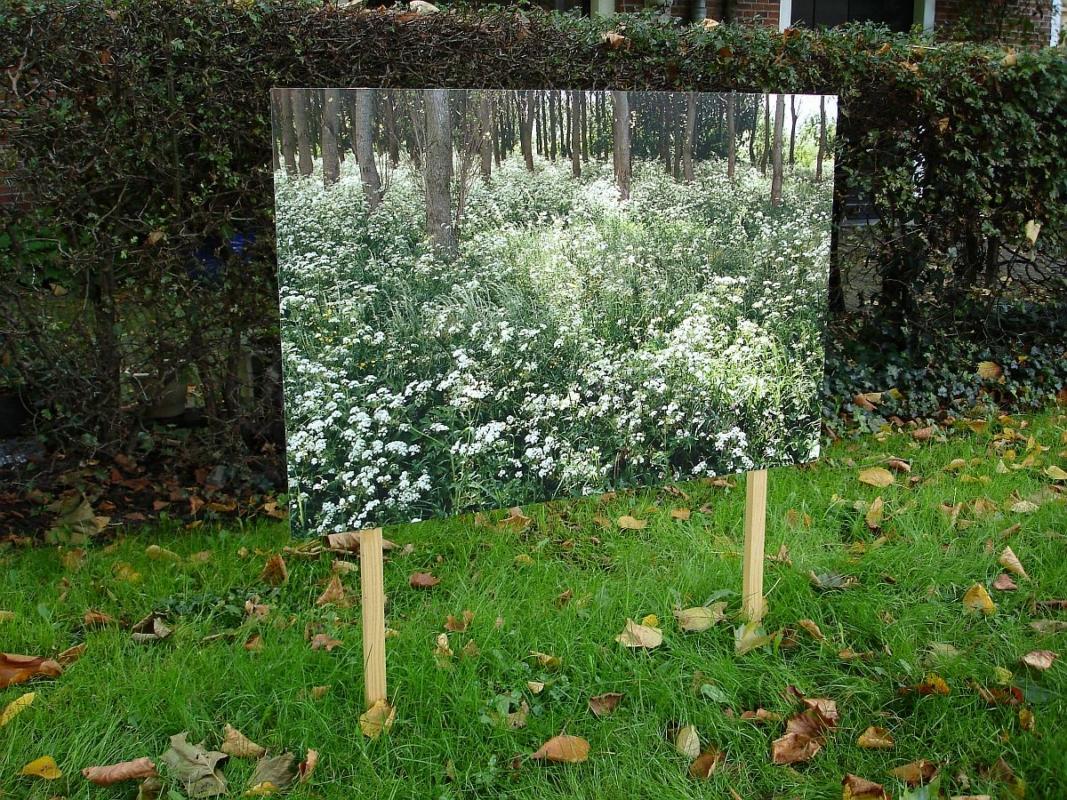 Biotoop 2005 color print 90 x 60 cm - Tussen hemel en aarde, Haarlem